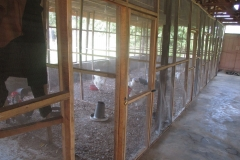 INTERIOR of the Poultry House Broiler chicks